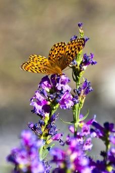 BirdCreek_Butterfly2-5860-1