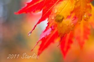 Raindrop on leaf #1