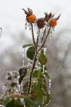 FreezingRain_6317-3