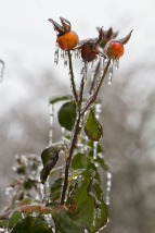 FreezingRain_6317-3
