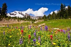HellroaringViewpoint_flowers_7677