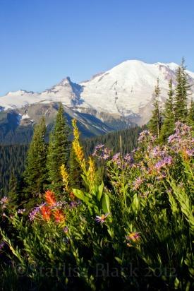 MtRainer_Wildflowers-web-6812
