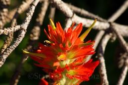 MtRainer_Wildflowers-web-6880