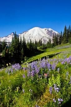 MtRainer_Wildflowers-web-6964