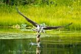 Osprey_MirrorLake-6080-1