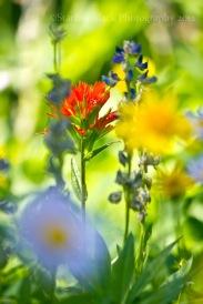 WildflowerBokeh_8158-1