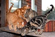 Kittens_4251_20100123-wo