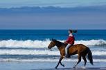 Oceanside_Horses_4732-3