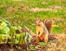 P-TownSquirrel_3253_20100114-wo