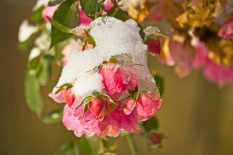 Snows of November 2010
