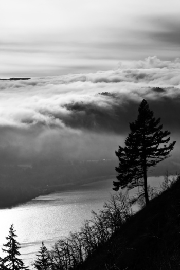Fog Waves over the Gorge
