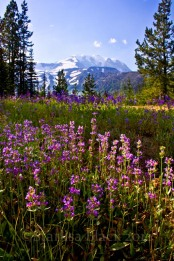 Helispot Wildflowers