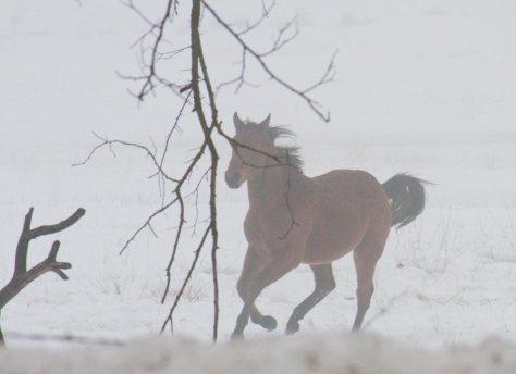 Fog-Horse_9972_20091218
