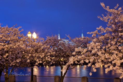 Cherry_TowerTwilight_6229-2