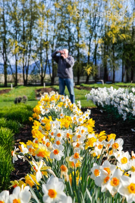 Daffodils-n-Larry-8673