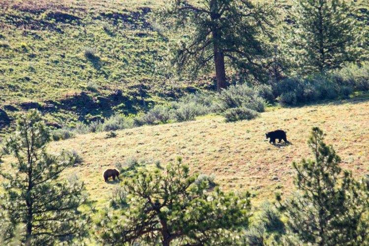 Bear-web-6056