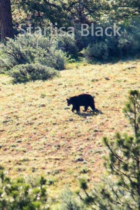Bear-web2-6056