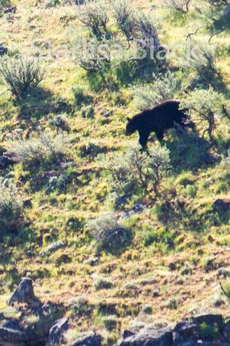 Bear-web2-6063