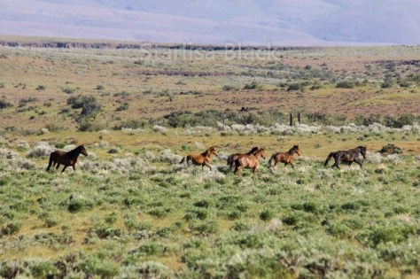 WildHorses-web2-6148