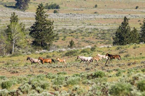 WildHorses-web2-6154