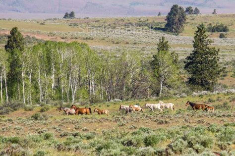 WildHorses-web2-6156