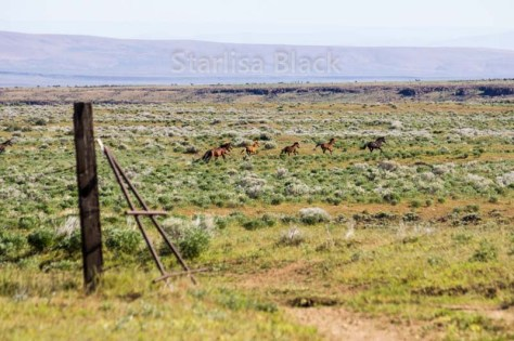 WildHorses-web2-6157