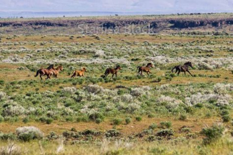 WildHorses-web2-6158