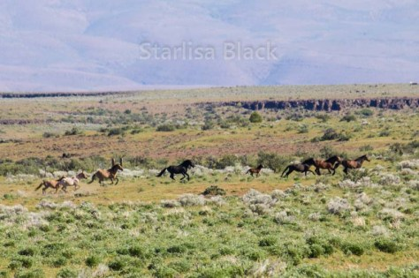 WildHorses-web2-6159