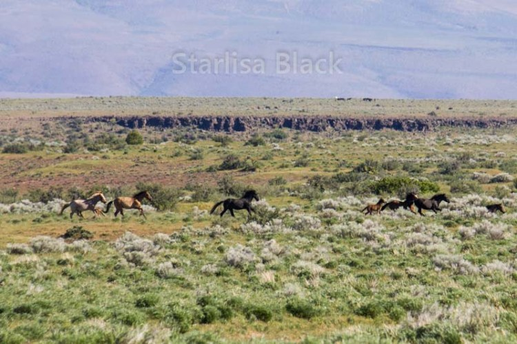 WildHorses-web2-6161