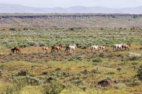 WildHorses-web2-6210
