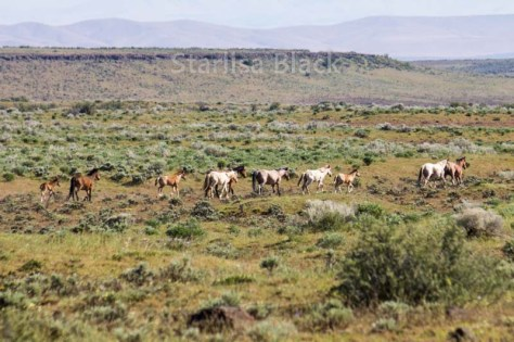 WildHorses-web2-6211