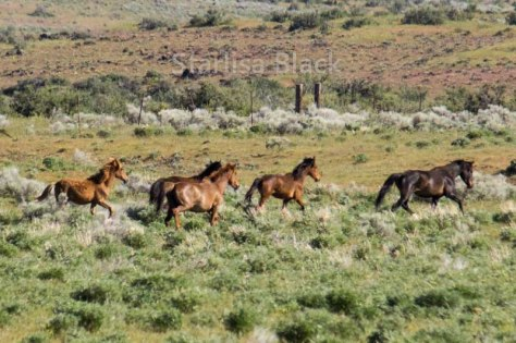 WildHorses-web3-6148
