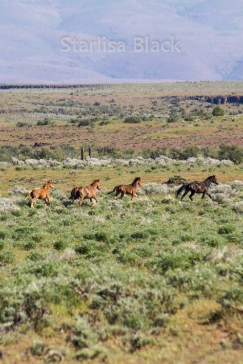 WildHorses-web3-6149