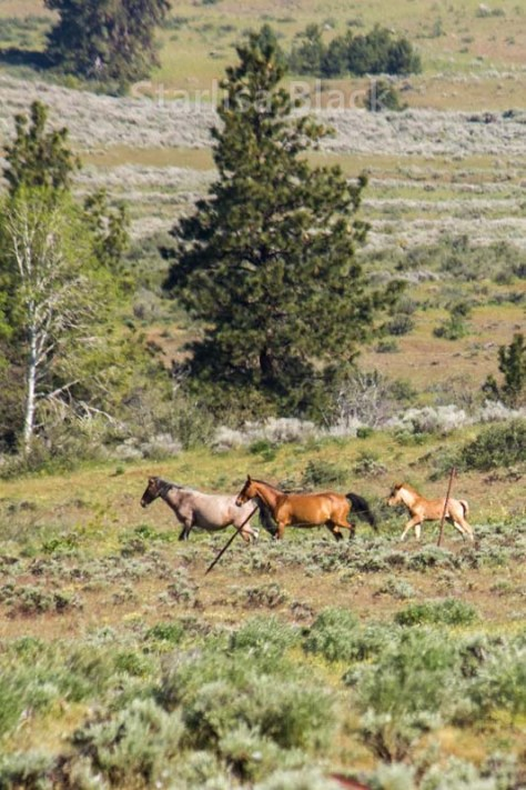 WildHorses-web3-6154
