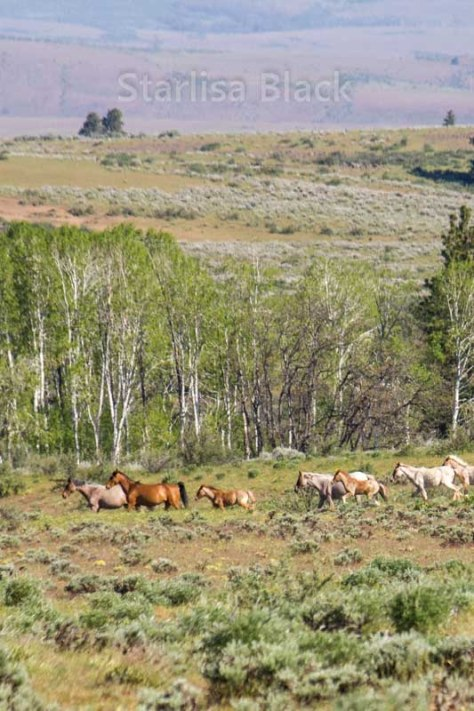 WildHorses-web3-6156