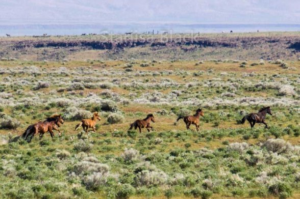 WildHorses-web3-6157