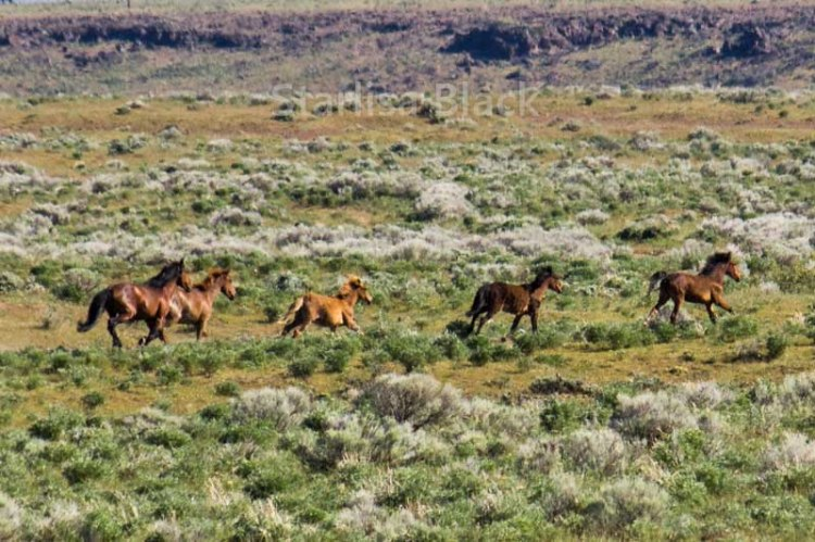 WildHorses-web3-6158