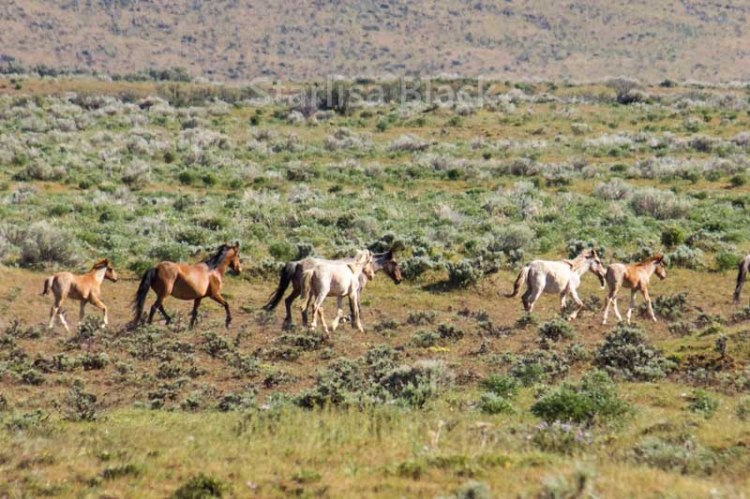 WildHorses-web3-6210