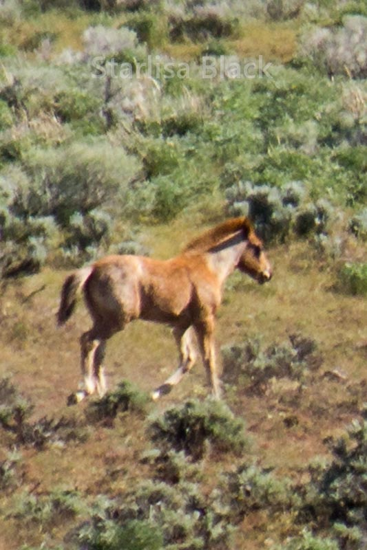 WildHorses-web3-6211