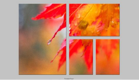 AutumnMaple FormalFourTriptych