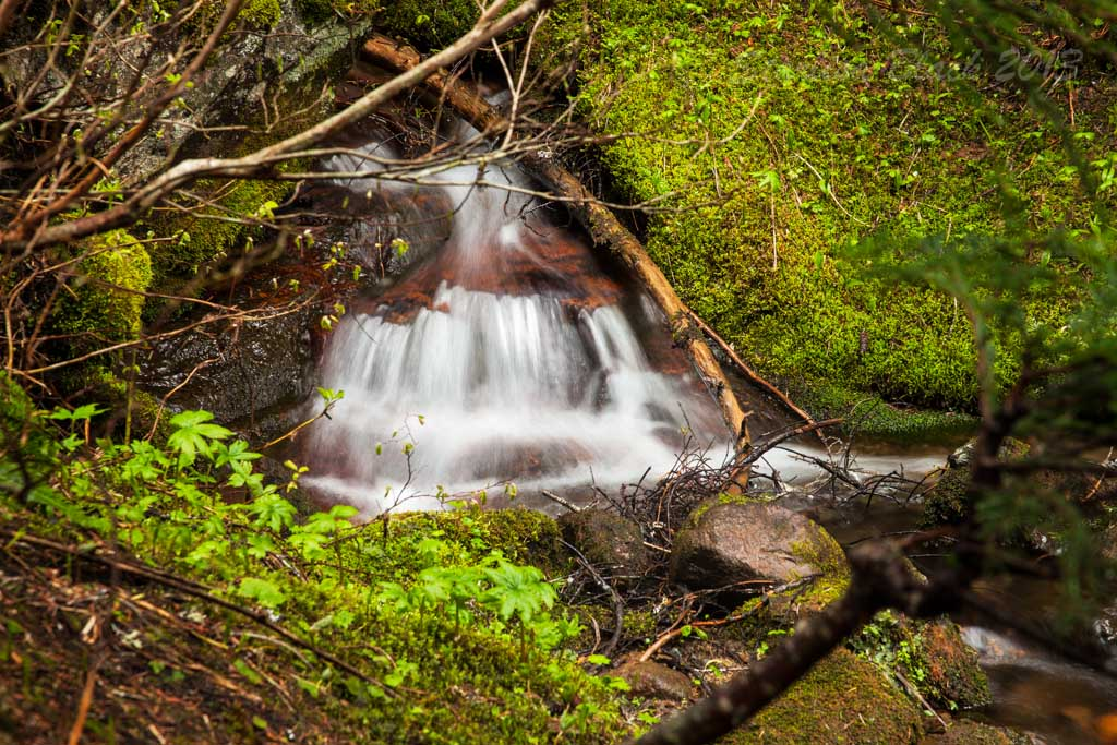 along the Creek above Narada Falls, Mount Rainer National Park