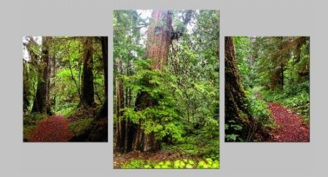 OldGrowth ClassicTriptych - Copy