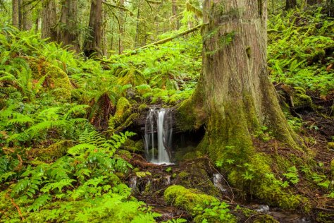 Tree-Waterfall_MountRainer_7644