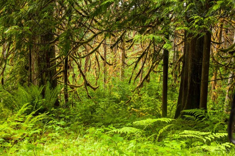 Trees_mossy-RainerPark_7605