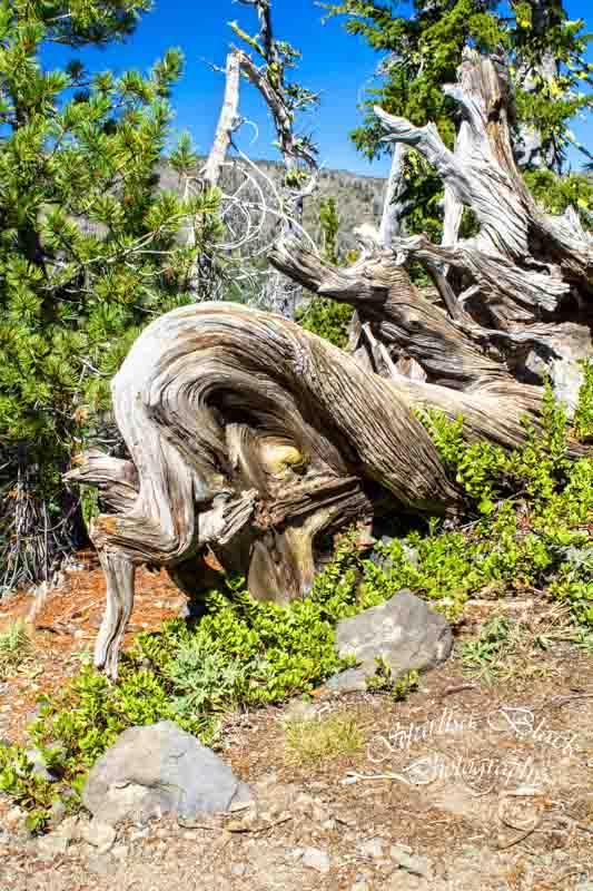 ClimbersTrail-treesWM_BCM-0687