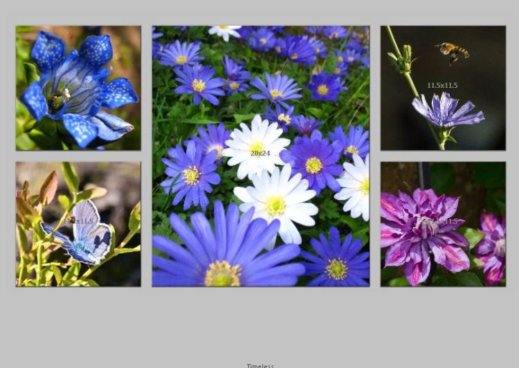 Timeless Cluster_ Flowers