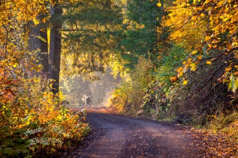 Early October misty morning Bike rider at Trout Lake, Washington