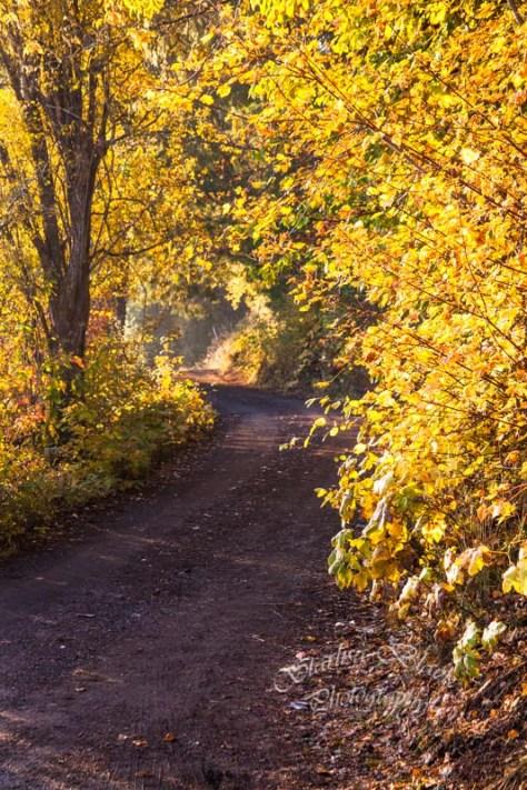 AutumnRoad_5637-3