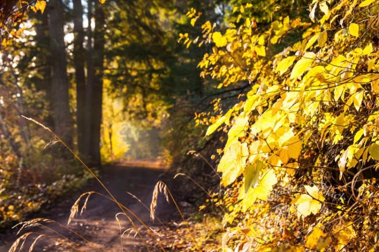 AutumnRoad_5641-4