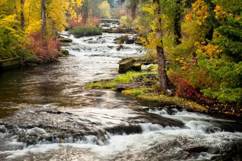 Trout Lake Creek in Fall 5741